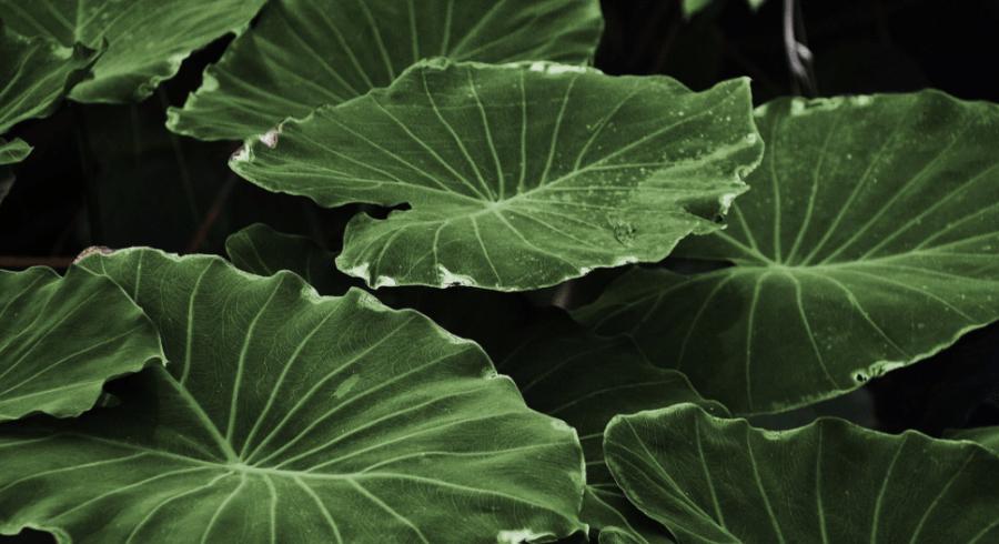 Mit diesen Pflanzen ein grünes Paradies erschaffen